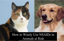 How to Wisely Use NSAIDs in Animals at Risk