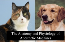 The Anatomy and Physiology of Anesthetic Machines