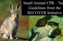 Small Animal CPR - New Guidelines from the RECOVER Initiative