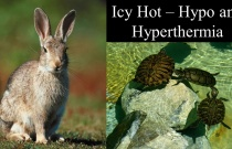 Icy Hot - Hypo and Hyperthermia