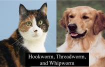 Hookworm Threadworm and Whipworm