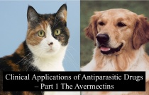 Clinical Applications of Antiparasitic Drugs - Part I The Avermectins
