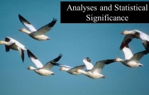 Analyses and Statistical Significance