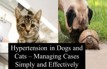 Hypertension in Dogs and Cats - Managing Cases Simply and Effectively