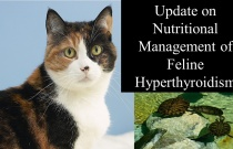 Update on Nutritional Management of Feline Hyperthyroidism - What Have We Learned
