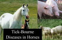 Tick-Borne Diseases in Horses