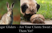 Sugar Gliders - Are Your Clients Sweet On Them Yet