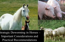 Strategic Deworming in Horses - Important Considerations and Practical Recommendations