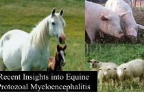 Recent Insights into Equine Protozoal Myeloencephalitis