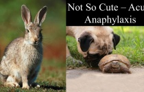 Not So Cute - Acute Anaphylaxis