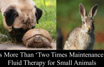 It's More Than 'Two Times Maintenance'- Fluid Therapy for Small Animals