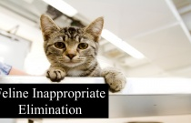 Feline Inappropriate Elimination