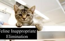Feline Inappropriate Elimination