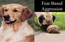 Fear Based Aggression
