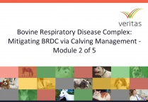 Bovine Respiratory Disease Complex: Mitigating BRDC via Calving Management - Module 2 of 5