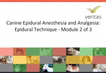 Canine Epidural Anesthesia and Analgesia: Epidural Technique - Module 2 of 3
