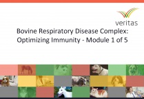Bovine Respiratory Disease Complex: Optimizing Immunity - Module 1 of 5