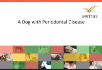 A Dog with Periodontal Disease