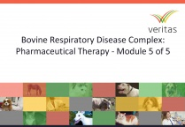 Bovine Respiratory Disease Complex: Pharmaceutical Therapy - Module 5 of 5