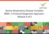 Bovine Respiratory Disease Complex: BRDC: A Practical Diagnostic Approach - Module 4 of 5