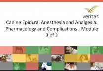 Canine Epidural Anesthesia and Analgesia: Pharmacology and Complications - Module 3 of 3