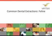Common Dental Extractions: Feline