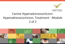 Canine Hyperadrenocorticism: Hyperadrenocorticism, Treatment - Module 2 of 2