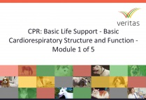 CPR: Basic Life Support - Basic Cardiorespiratory Structure and Function - Module 1 of 5