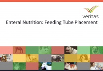 Enteral Nutrition: Feeding Tube Placement