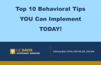 Top 10 Behavioral Tips You Can Implement TODAY!