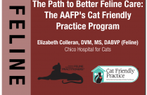 The Path to Better Feline Care: The AAFP's Cat Friendly Practice® Program