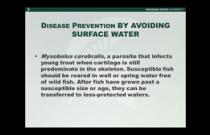 B-1015 Faisal - Aquatic Conservation Medicine