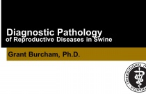 Diagnostic Pathology of Reproductive Diseases in Swine