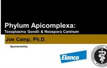 Phylum Apicomplexa: Toxoplasma Gondii & Neospora Caninum