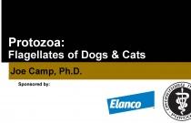Protozoa: Flagellates of Dogs & Cats