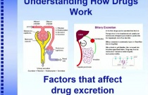 Understanding How Drugs Work: Factors that Affect Drug Excretion