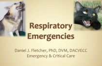 Diagnosis and Management of Patients with Acute Respiratory Distress