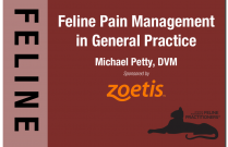 Feline Pain Management in General Practice
