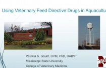 B-1024 Gaunt - Veterinarian's Role in Issuing Veterinary Feed Directives for Aquaculture