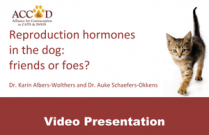 "ACC&D's 5th International Symposium: ""Reproduction hormones in the dog: friends or foes?"" by Dr. Karin Albers-Wolthers and Dr. Auke Schaefers-Okkens (presentation)"