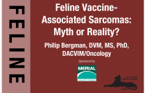 Feline Vaccine-Associated Sarcomas: Myth or Reality?