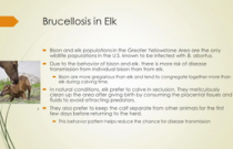 Brucellosis