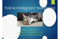 Technician Case Report: Feline Malignant Neoplasia