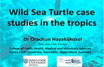 B-1026 Hayakijkosol - Sea Turtle Medicine