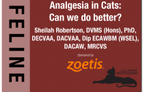 Analgesia for Cats: Can we do better?