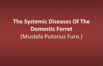 The Systemic Diseases Of The Domestic Ferret (Mustela Putorius Furo.)