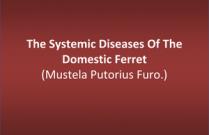The Systemic Diseases Of The Domestic Ferret (Mustela Putorius Furo.)