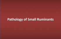 Pathology of Small Ruminants