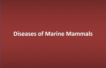 Diseases of Marine Mammals