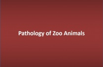 Pathology of Zoo Animals